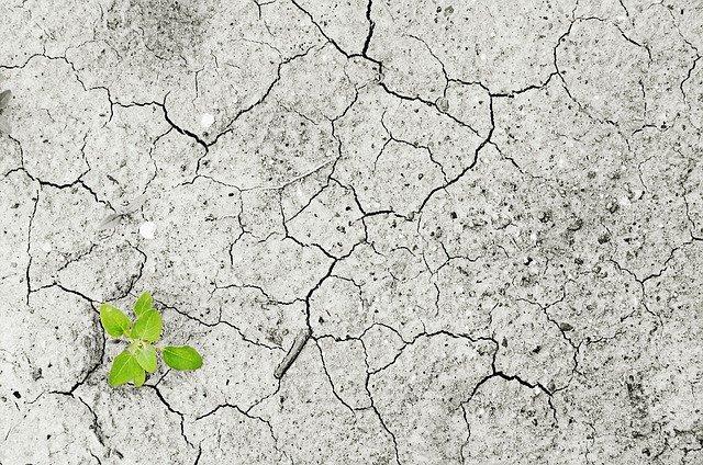 Le stress hydrique, une conséquence dramatique de la pénurie en eau