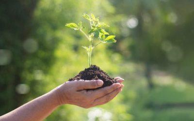 Sauver les arbres pour sauver la vie !