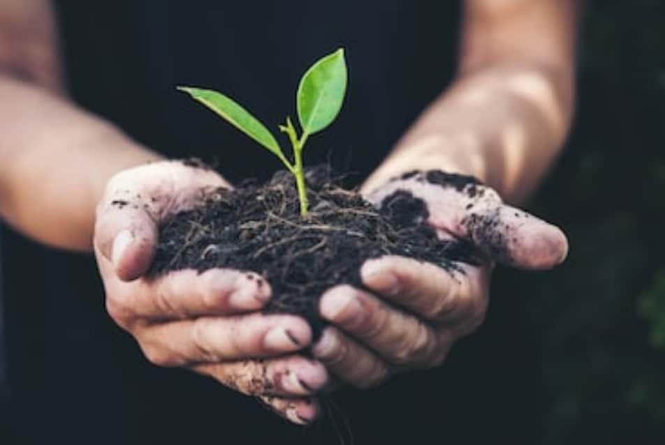 Reboisement : quelle importance pour l'environnement ?
