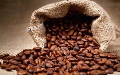 Reforestation : zoom sur le potentiel caché de la pulpe de café